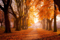 Colorful trees in Park Stock Photo