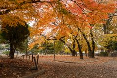 Colorful autumn in the park stock photo