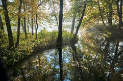 Colorful trees on the pond in the park. During autumn in Poznan Stock Images