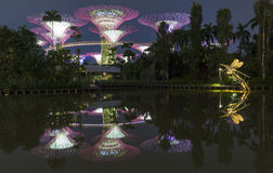 Colorful trees with reflection at Gardens by the Bay Stock Photography