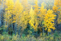 Colorful Trees in River Valley Royalty Free Stock Images