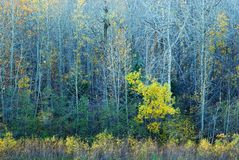 Colorful Trees in River Valley Royalty Free Stock Photography