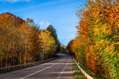 Colorful trees by a road Stock Images