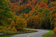 Colorful trees with road Royalty Free Stock Image