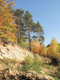 Colorful trees on the rock Royalty Free Stock Photography