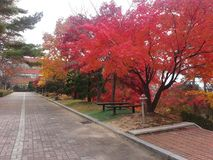 Colorful trees on sides of pedestrian pathway i park Stock Photos