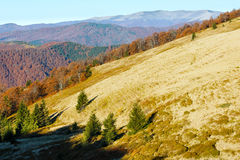 Colorful trees on slope in autumn Carpathian. Royalty Free Stock Photo