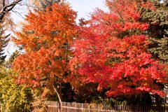 Colorful trees at a sunny day in autumn royalty free stock image