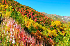 Colorful trees, Svaneti Georgia Stock Images