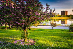 Colorful trees and view of Druid Lake in Druid Hill Park, Baltim Royalty Free Stock Image