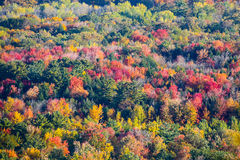 Colorful Trees in Wisconsin. A colorful Wisconsin hillside view of fall trees in October stock photo