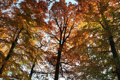 Colorful treetops Royalty Free Stock Images