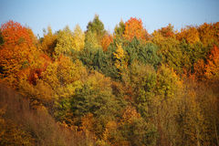 Colorful treetops of mixed kinds Stock Photo
