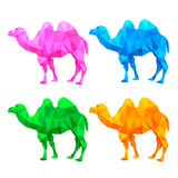 Colorful triangle of camel shape Stock Photos