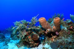 Colorful tropical coral reef Stock Photos
