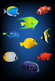 Colorful tropical fish. Illustration of different colorful tropical fish with blue gradient background Royalty Free Stock Images