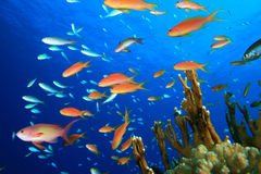 Free Colorful Tropical Fish Stock Photography - 16250522