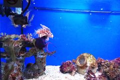 Colorful tropical fish in an aquarium with aquatic plants, corals and neon lights