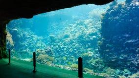 Colorful Tropical Fish in Aquarium Exhibit Stock Photos