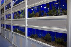 Colorful Tropical fish aquariums. Rows of colourful Tropical fish tanks stock photography