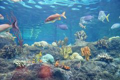 Colorful Tropical fish. And coral, taken in florida Royalty Free Stock Photography