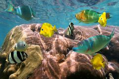 Colorful tropical fish and coral. With water surface in background Royalty Free Stock Images