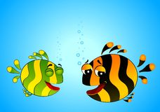 Colorful tropical fish in love Stock Images