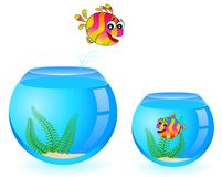 Colorful tropical fish in love. For the day of Valentine Stock Image