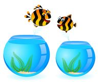 Colorful tropical fish in love. For the day of Valentine Stock Photography