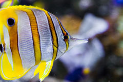 Colorful tropical fish. Side view of colorful tropical fish swimming underwater Stock Photo