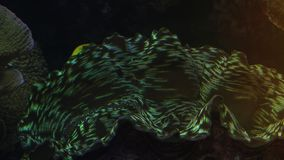 Colorful tropical fish swim near other marine life. With light effect, ultra hd 4k, real time stock footage