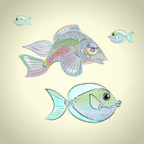 Colorful tropical fish. Two colorful tropical fish with funny face Royalty Free Stock Photo
