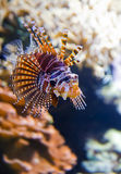 Colorful tropical fish under water Stock Image