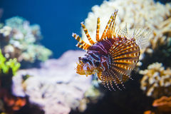 Colorful tropical fish under water Stock Photography
