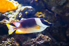 Colorful tropical fish under water Stock Images