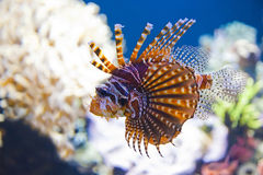 Colorful tropical fish under water Royalty Free Stock Photography