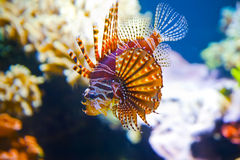Colorful tropical fish under water Stock Photos