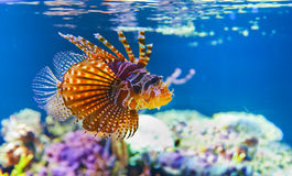Colorful tropical fish under water Royalty Free Stock Images