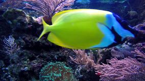 Colorful tropical fishes. And marine life underwater stock footage