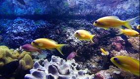 Colorful tropical fishes stock video footage