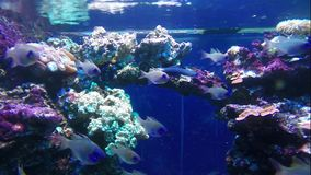 Colorful tropical fishes. And marine life underwater stock video footage