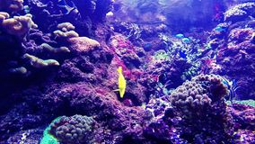 Colorful tropical fishes stock video