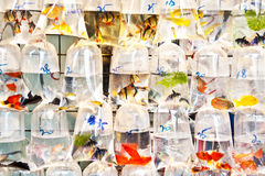 Colorful tropical fishes in plastic Royalty Free Stock Images