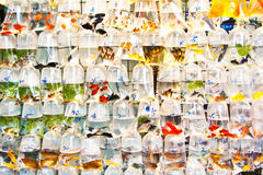 Colorful tropical fishes in plastic Royalty Free Stock Image