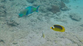 Colorful tropical fishes stock footage