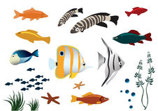 Colorful tropical fishes on white background. Vector illustration of colorful tropical fishes on white background Stock Photos