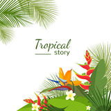 Colorful tropical flower, plant and leaf pattern background Stock Photos