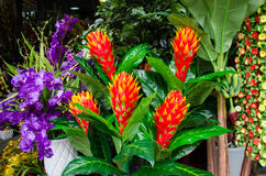 Colorful tropical flowers for sale at an outdoor market Royalty Free Stock Images