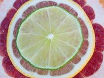 Colorful tropical fruit slices - lemon, lime, grapefruit Stock Photos