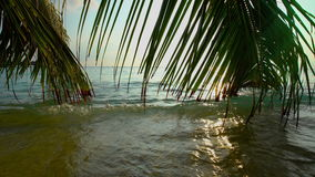 Colorful tropical landscape with palm branches in the ocean waves. stock video footage